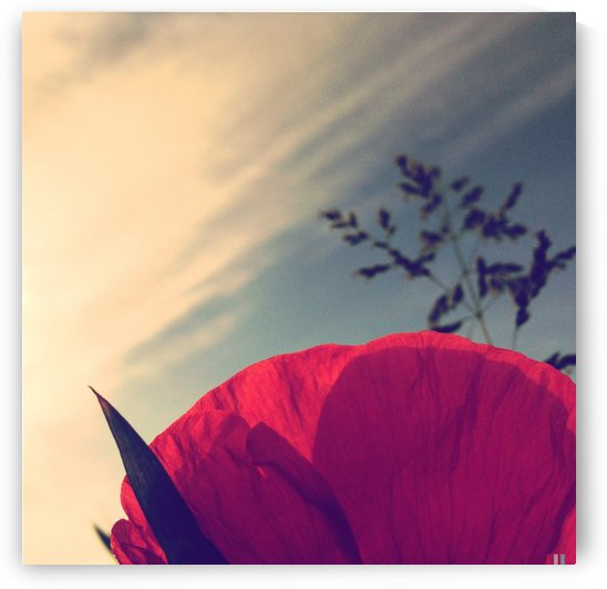 Poppy sky by Ulf Bley