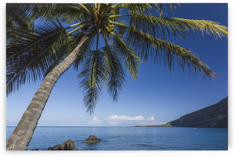 Coconut Palm (Cocos nucifera) on Kealakekua Bay with view of Captain Cook Monument; Kona, Hawaii, Island of Hawaii, United States of America by PacificStock