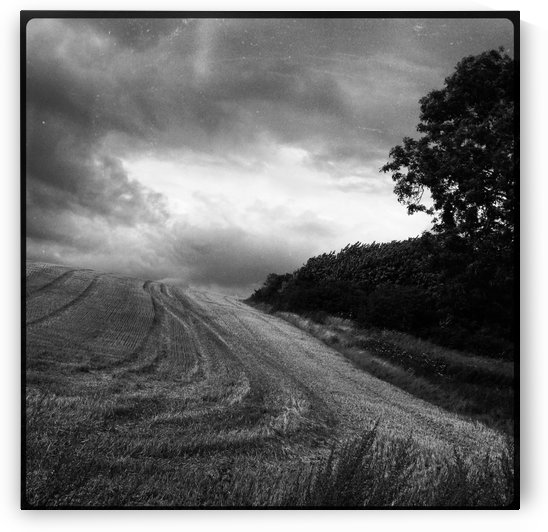 Harvest - and then? by Ulf Bley