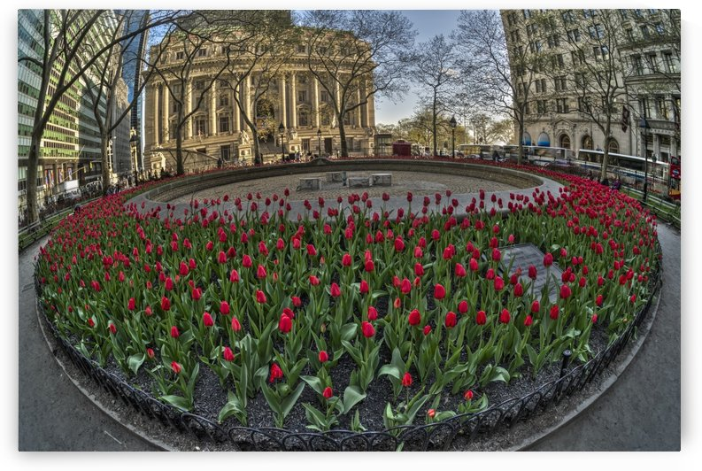 Tulip display in Bowling Green Park; New York City, New York, United States of America by PacificStock