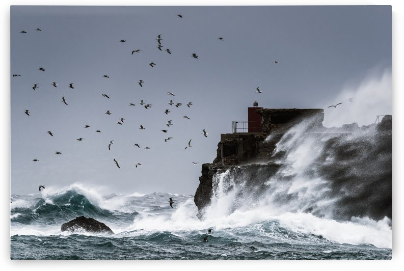Waves crashing against the rugged rock coastline as birds fly overhead against a blue sky; La Isla, Tarifa, Costa de la Luz, Cadiz, Andalusia, Spain by PacificStock