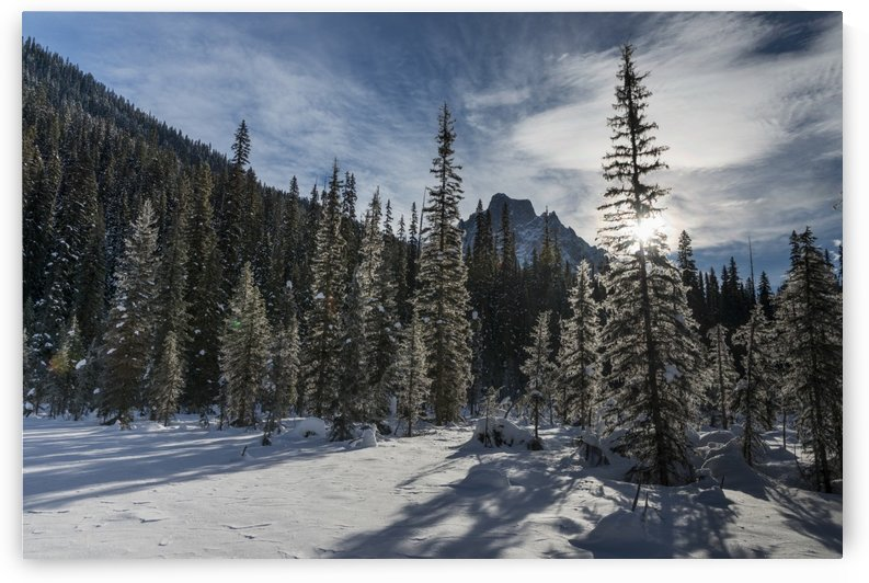 Snow on the rugged Canadian Rocky Mountains and trees, Yoho National Park; Field, British Columbia, Canada by PacificStock