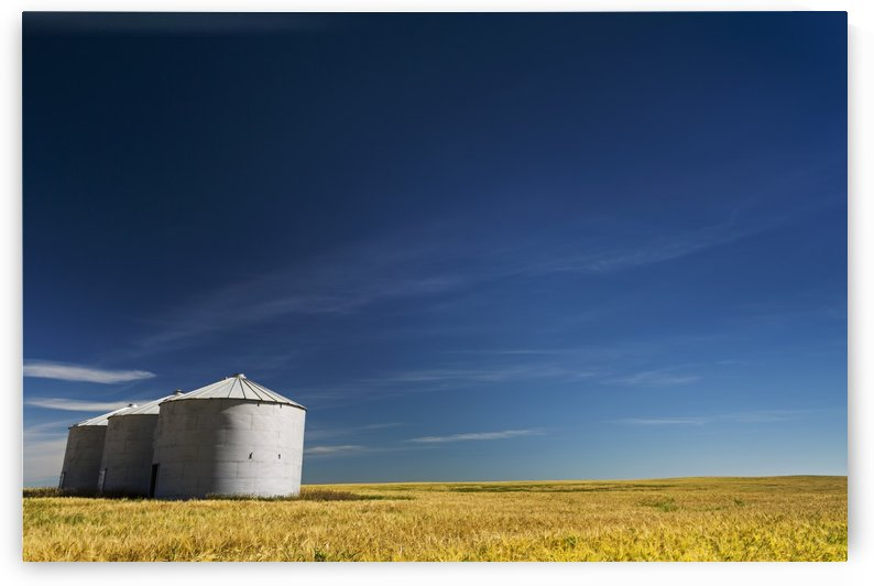 Large metal grain bins in a barley field with blue sky and wispy clouds; Acme, Alberta, Canada by PacificStock