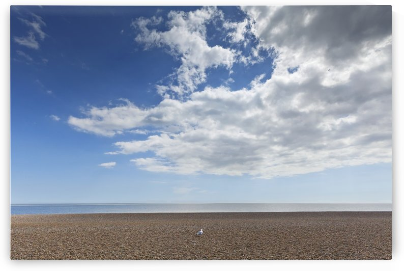 Lone bird on an empty beach with blue sky and cloud over the ocean; Aldeburgh, Suffolk, England by PacificStock
