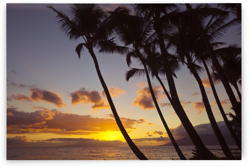 Sunset and silhouette of palm trees; Keawekapu, Wailea, Maui, Hawaii, United States of America by PacificStock