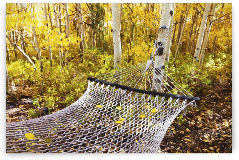 Classic hammock invites visitors to relax among aspen trees in bright autumn colors, near Bishop; California, United States of America by PacificStock