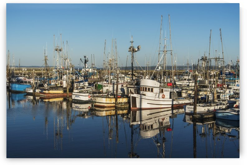 Fishing boats in a harbour; Westport, Washington, United States of America by PacificStock