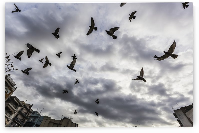 Silhouetted flock of birds flying against a cloudy sky; Thessaloniki, Greece by PacificStock