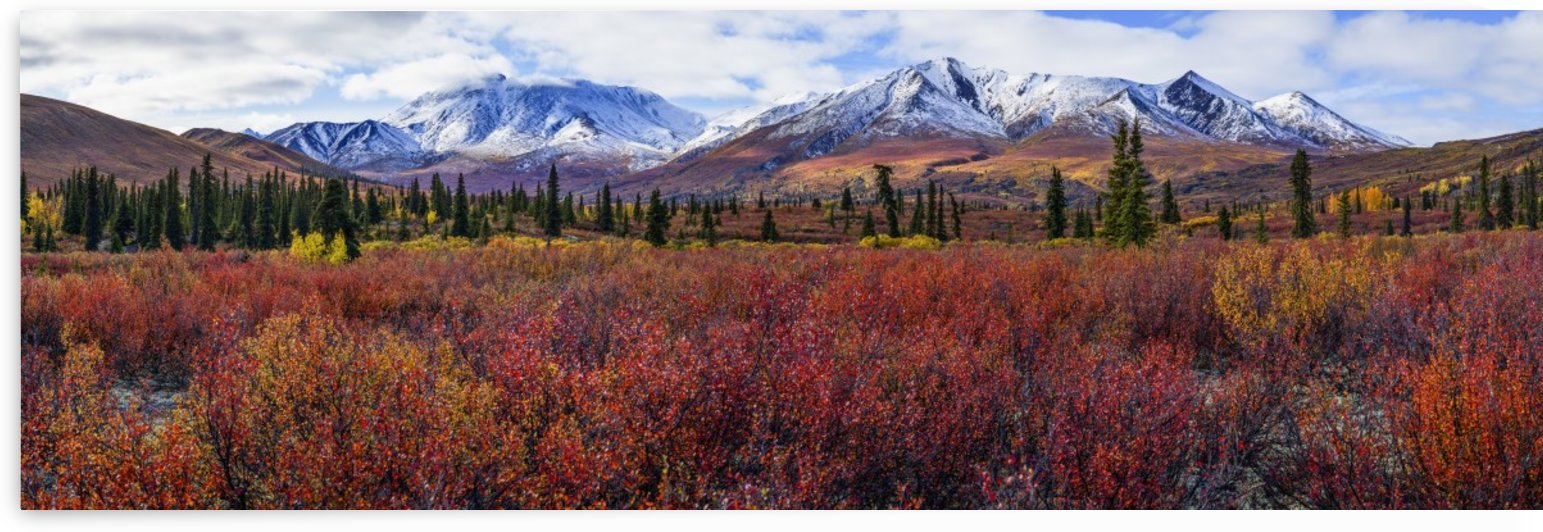 Autumn colours brighten the landscape in Tombstone territorial Park, along the Dempster highway; Yukon, Canada by PacificStock