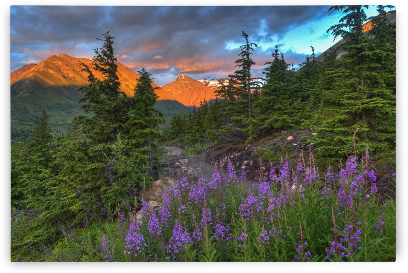 South Fork trail near Eagle River at sunset on a summer day in South Central Alaska. by PacificStock