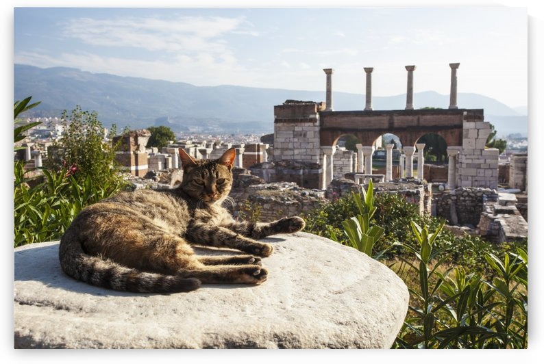 A cat lays in the sun on a rock at the ruins of Saint John's Basilica and the tomb of Saint John; Ephesus, Izmir, Turkey by PacificStock
