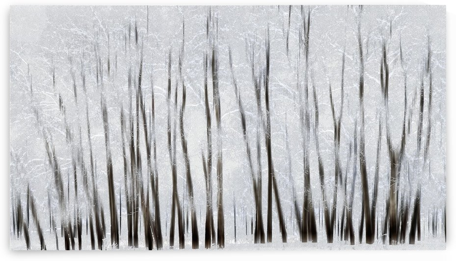 Abstract trees with motion blur; Alberta, Canada by PacificStock