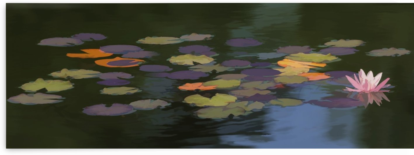 Water lilies (Nymphaeaceae) on a pond; Alberta, Canada by PacificStock