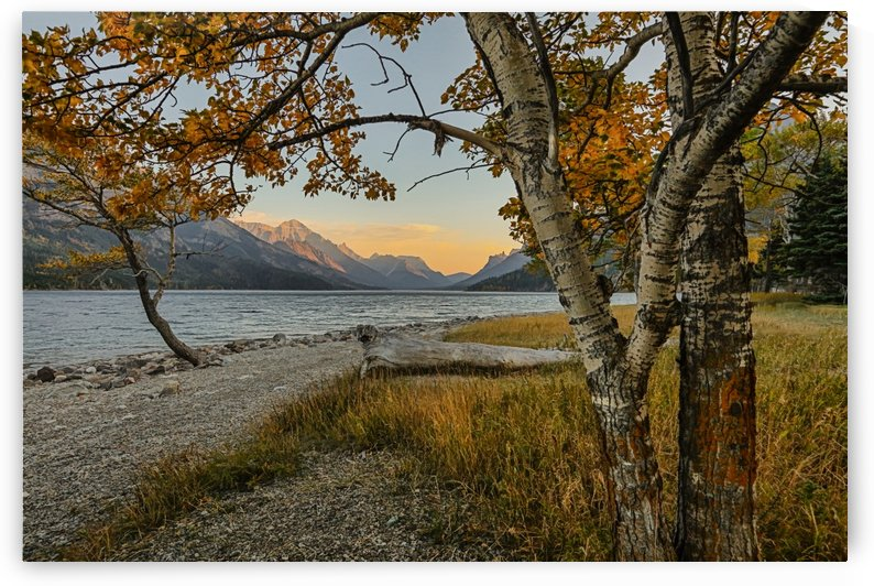 Waterton lake in autumn colours at sunset against the mountains, Waterton Lakes National Park; Alberta, Canada by PacificStock