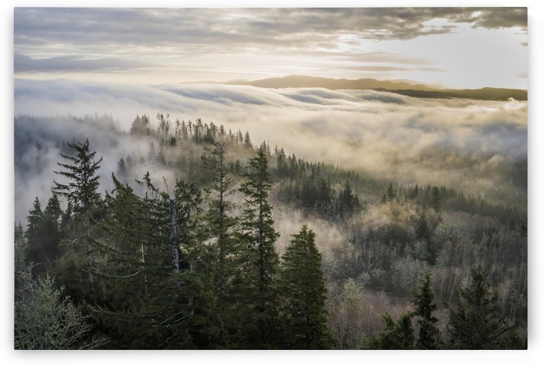 Fog and forest seen from Coxcomb Hill; Astoria, Oregon, United States of America by PacificStock