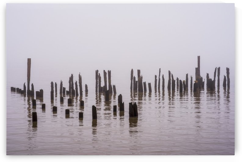 Fog obscures the Columbia River with pilings near the shore; Astoria, Oregon, United States of America by PacificStock