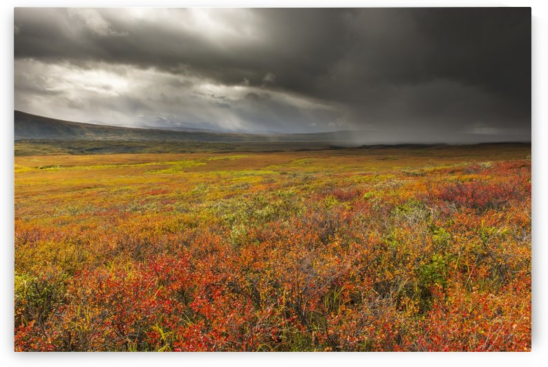 A storm passes over the bright colors of autumn in Denali National Park & Preserve, Alaska. by PacificStock