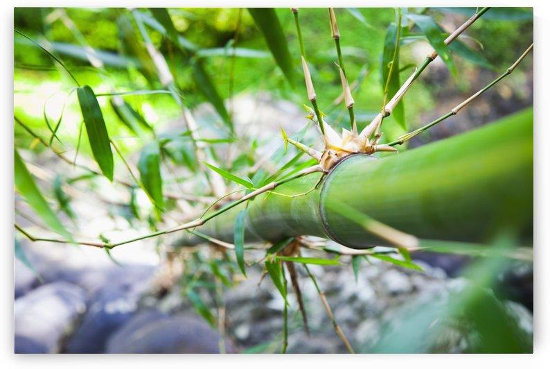 Bamboo stalk; Granada by PacificStock
