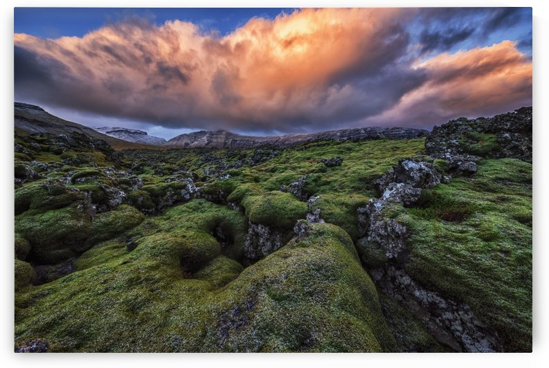 Moss covered lava flow at sunrise on the Snaefellsness Peninsula; Iceland by PacificStock
