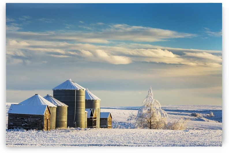 Snow covered metal and wooden grain bins with frosted trees, bushes and stubble with clouds and blue sky; Rosebud, Alberta, Canada by PacificStock