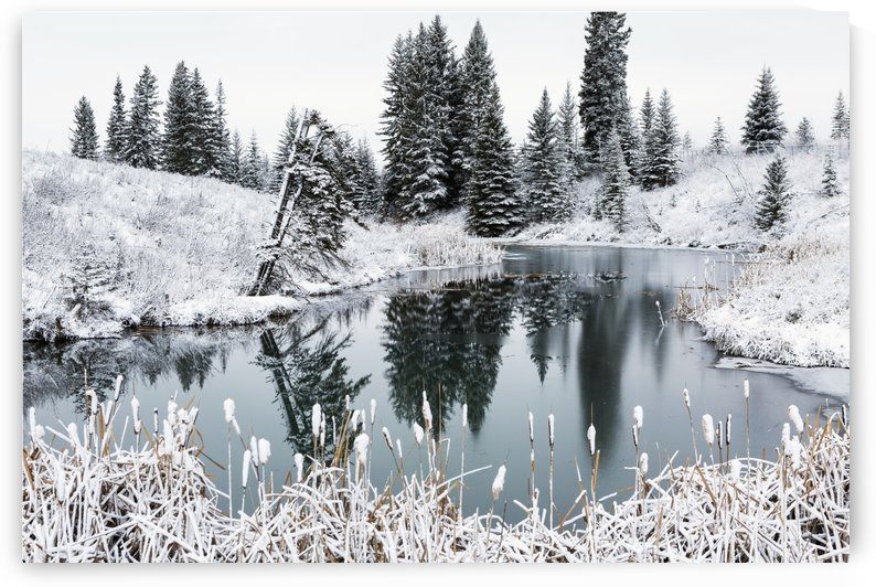 An open pond in the winter with snow covered hilly banks, evergreen trees and bulrushes; Calgary, Alberta, Canada by PacificStock