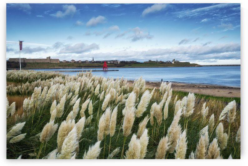 Littlehaven Bay and Herd Groyne Lighthouse; South Shields, Tyne and Wear, England by PacificStock