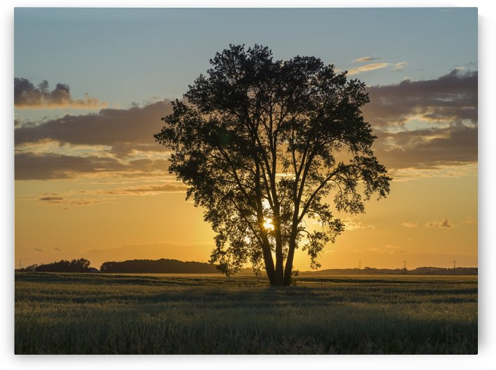 Silhouette of a tree with a golden sky at sunrise on a rural landscape; Lorette, Manitoba, Canada by PacificStock