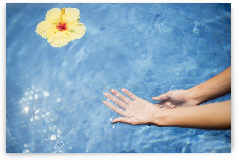 Dipping hands in the water with a floating flower; Island of Hawaii, Hawaii, United States of America by PacificStock