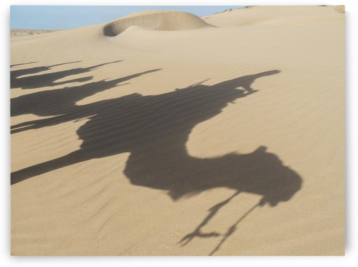 Shadows of camels and tourists on a beach trek on the sand; Essaourira, Morocco by PacificStock