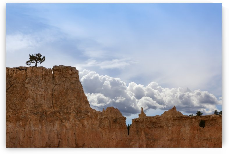 A tree grows alone along the ridges of Bryce Canyon National Park; Utah, United States of America by PacificStock