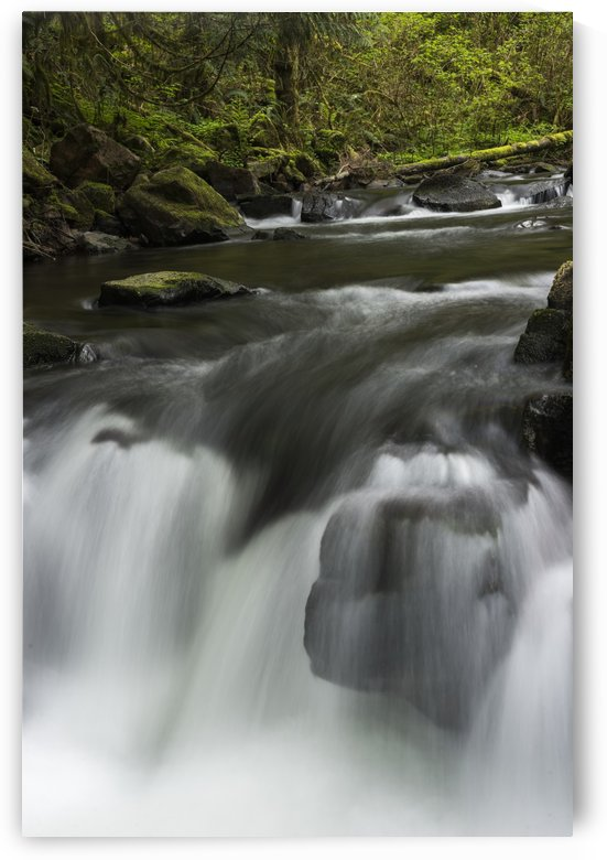 Fishhawk Creek cascades over the rocks; Jewell, Oregon, United States of America by PacificStock