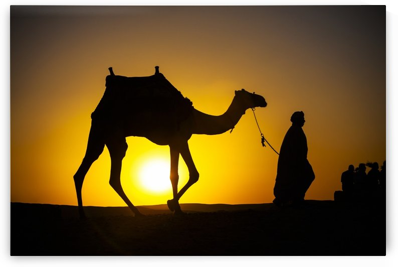 An Egyptian man silhouetted by the setting sun, leads a camel across the desert; Cairo, Egypt by PacificStock