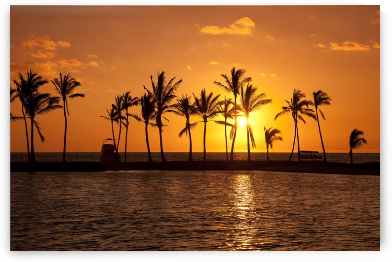 Golden sunset in an orange sky with silhouetted palm trees along the coastline; Hawaii, United States of America by PacificStock