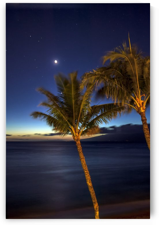 Moon and stars in the night sky with palm trees along the coast in the foreground; Maui, Hawaii, United States of America by PacificStock