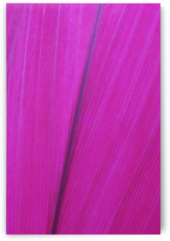 Close up detail of a pink flower petal; Hawaii, United States of America by PacificStock