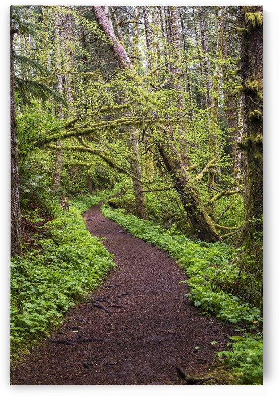 The trail leads to the top of Saddle Mountain; Hamlet, Oregon, United States of America by PacificStock