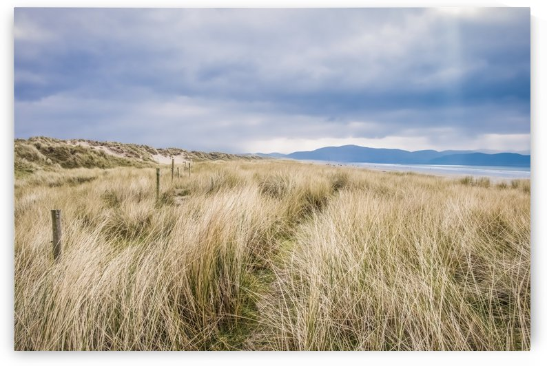 The sand dunes along Inch Beach in the Dingle Peninsula; County Kerry, Ireland by PacificStock