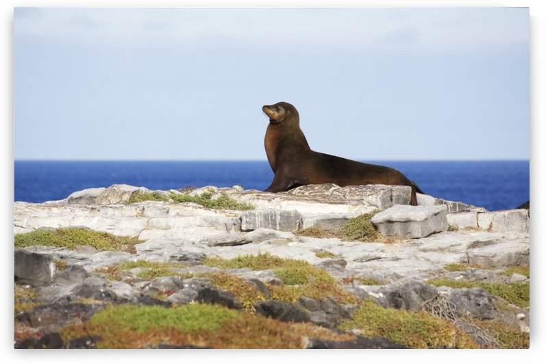 Sea lion on rocky promontory above blue sea bay by PacificStock