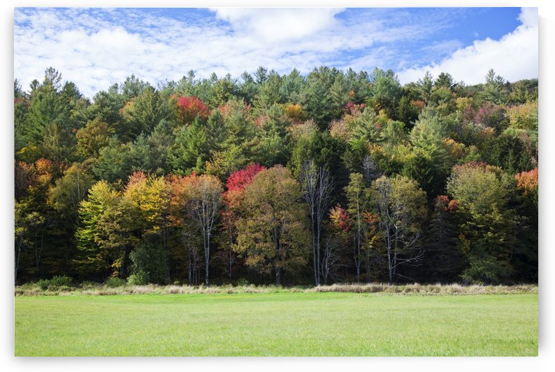 Colourful trees in autumn; Woodstock, Vermont, United States of America by PacificStock