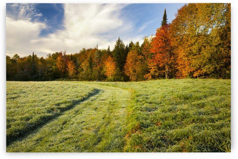 Autumn coloured trees and a grass field with a well-trodden trail through it; Waterbury, Vermont, United States of America by PacificStock