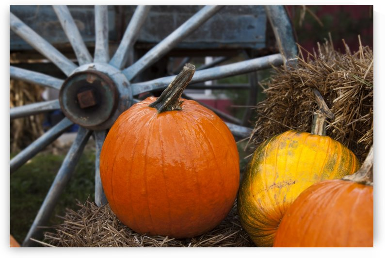 Pumpkins and wagon wheel; Stowe, Vermont, United States of America by PacificStock