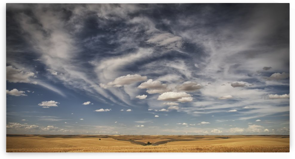 Wheat field under a blue sky with cloud; Palouse, Washington, United States of America by PacificStock