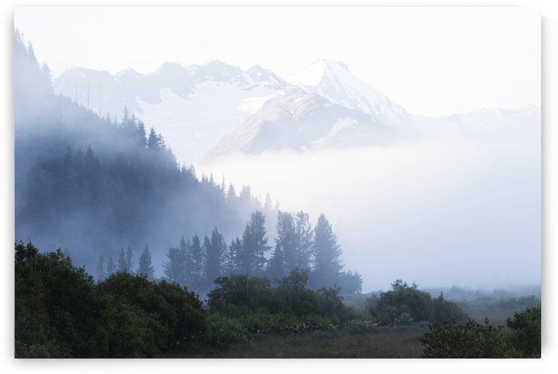 Early morning fog in South-central Alaska; Alaska, United States of America by PacificStock