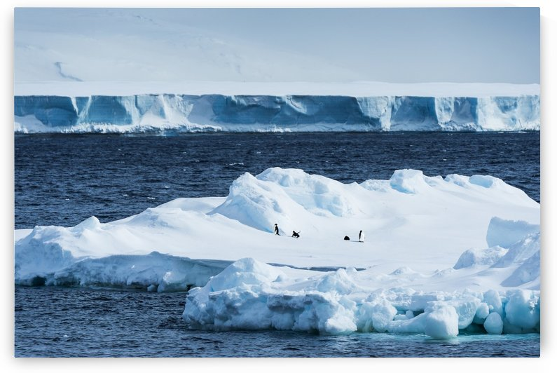 Penguins on an iceberg; Antarctica by PacificStock