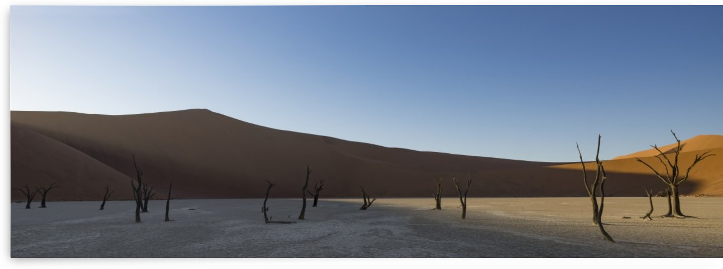 Sunrise starts to light up the sand dunes surrounding the Deadvlei, part of the Namib desert in Sossusvlei; Namibia by PacificStock