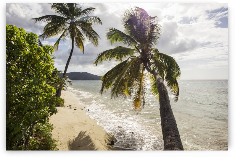 Two palm trees on the beach with sun flare; St. Croix, Virgin Islands, United States of America by PacificStock