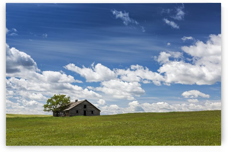 An old wooden building with one tree in a rolling grassy field with clouds and blue sky, West of High River; Alberta, Canada by PacificStock
