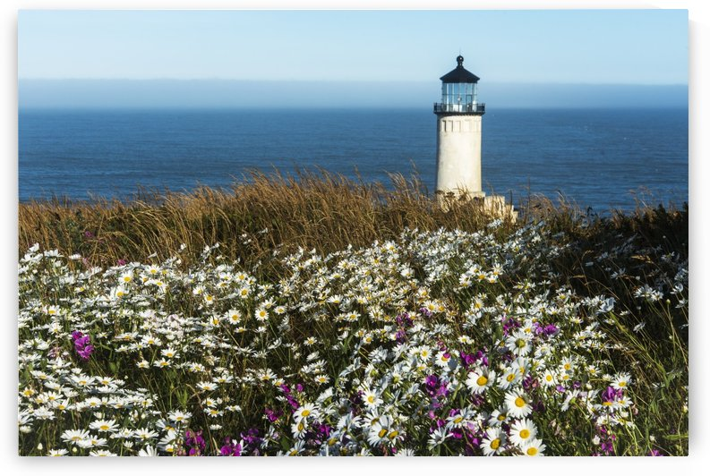 Flowers bloom near North Head Lighthouse on the Washington Coast; Washington, United States of America by PacificStock