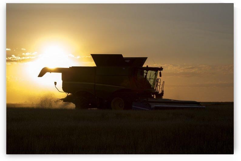 Combine cuts wheat in Northeast Colorado; Paoli, Colorado, United States of America by PacificStock
