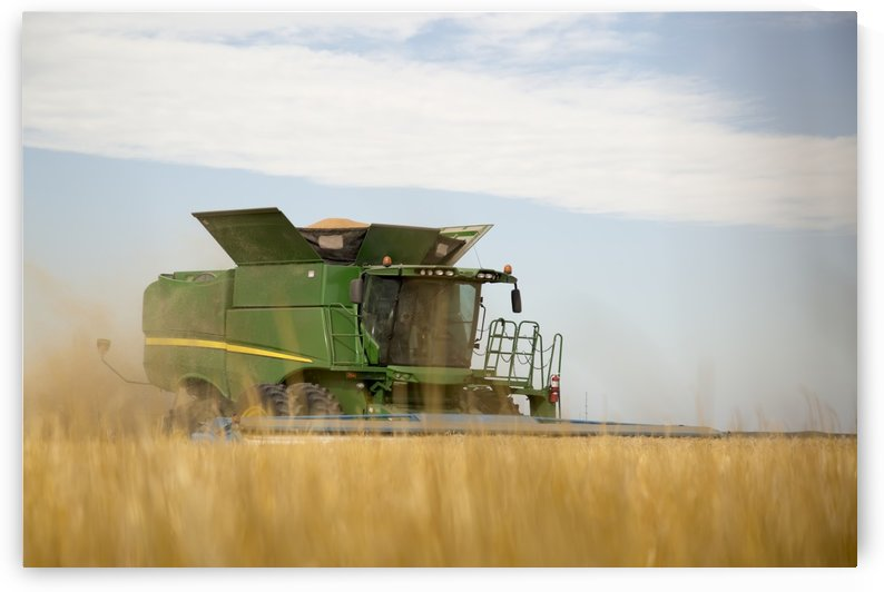 Combine cuts wheat in Northeast Colorado; Paoli, Colorado, United States of America by PacificStock